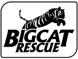 freetoedit tigerking bigcat bigcatrescue