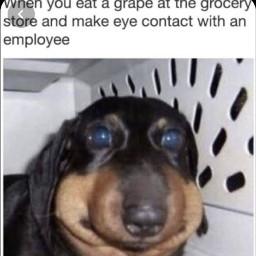 truestory memes