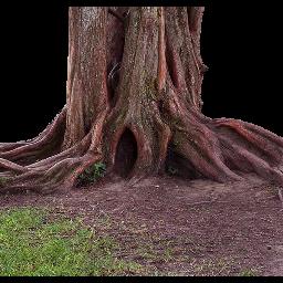 tree nature freetoedit