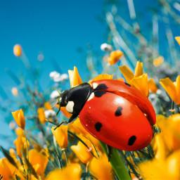 freetoedit nature spring april mrlb2000