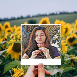 sunflowers sunday fcstayinspired stayinspired