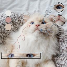 cat cutepets freetoedit