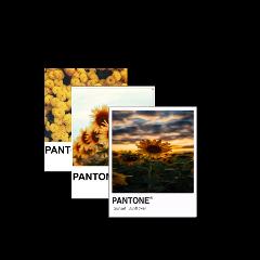yellow dark black flower pantone freetoedit
