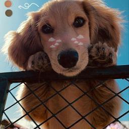 freetoedit cutedog cute dogy doglovers