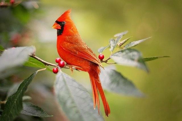 #freetoedit @gina-becker-7 #vogel #bird #tiere #animals #orange