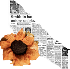 flower sunflower text newspaper periodico freetoedit