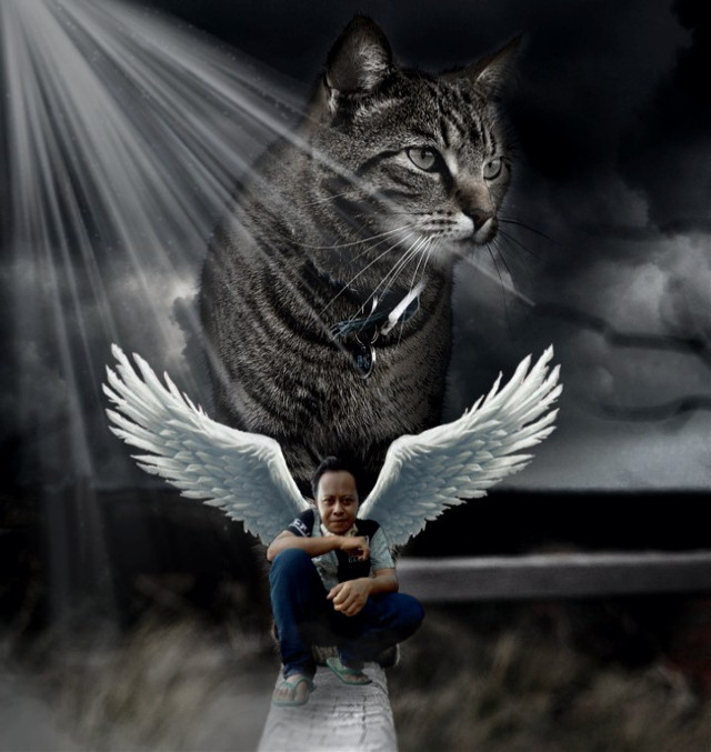 #freetoedit animal #kucing #animal