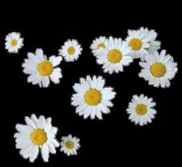 flower arthoe flowers yellow aesthetic freetoedit