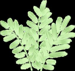 мазоккисти мазоккраски мазки цветок растение freetoedit