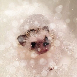 bathtime bubbles hedgehog cute followme