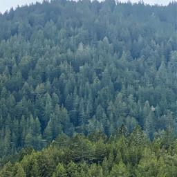 trees mountains nature naturelovers hike freetoedit