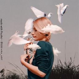 freetoedit freedom pigeon peaceful aesthetic