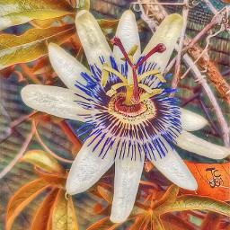 flower fotography