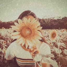 freetoedit sunflower simple vintage