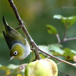 myphoto myclick photography bird nature freetoedit
