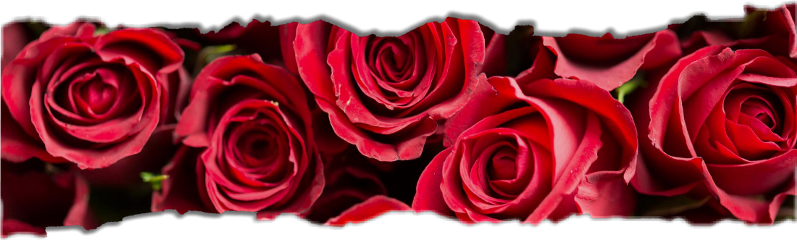 freetoedit freetoeditsticker papertear roses