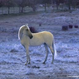 horse dream fantasy photography landscape