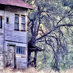 angeleyesimages landscape landscapephotography tree trees scary freetoedit