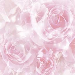 freetoedit flowers rosen roses pink