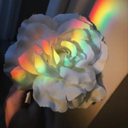 sunnyday flower raimbow🌈 raimbow
