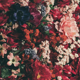 wallpaper flowers template background