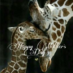 freetoedit mothersday giraffe motherandchild