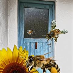 honeybeescomb