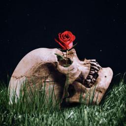 freetoedit skull skullhead rose grassfield ecflowereyes flowereyes