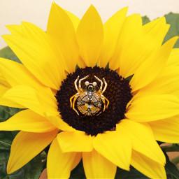 sunflower spider jewellery earring crystal freetoedit