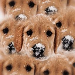 freetoedit dog kaleidoscope animal madebyme eccolorfulkaleidoscope