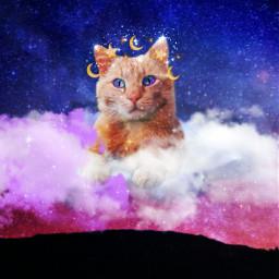 freetoedit cat galaxy star starcat