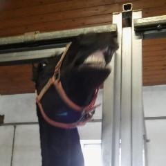 horse--girl
