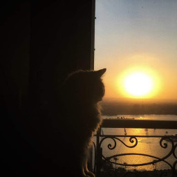cats nile rivers catsphotography orangecat pcfrommywindow frommywindow