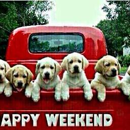 freetoedit pickup truck puppies dogs
