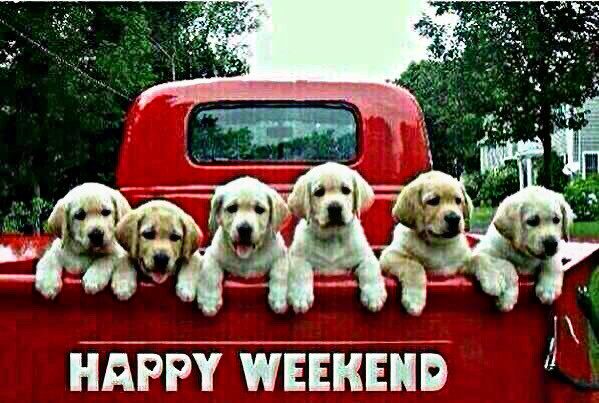 #freetoedit #pickup #truck #puppies #dogs #petsandanimals #tan #red #happy #weekend #text #greeting #message #cute #quote @moondog