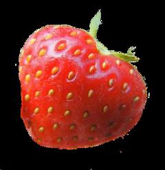 freetoedit strawberry strawberries heart hearts