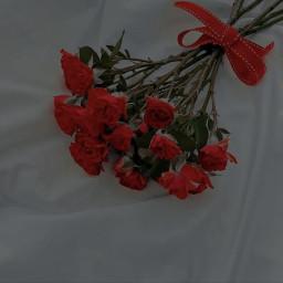 aesthetic red flower aestheticred