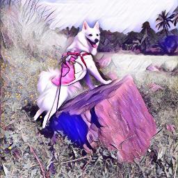 nightcore morningwalk dogspitz happydog