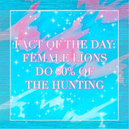 facts fotd factoftheday phonto female