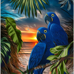 tropical myedit sunset paradise parrot srcmonsteramoment freetoedit