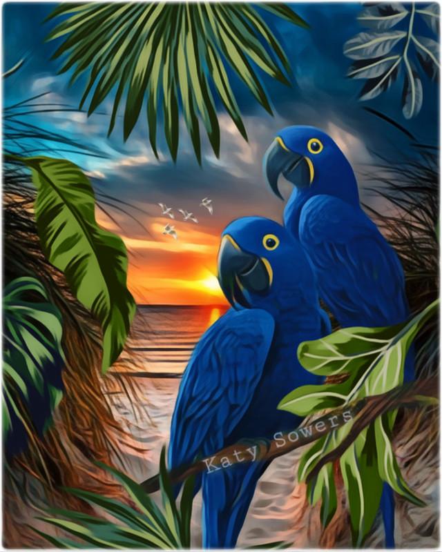 #tropical          https://picsart.com/i/328158927039201?challenge_id=5ecb9b73e0392639c2efbd1a                      #myedit #sunset #paradise #parrot #beach #colorful #heypicsart #picsart #madewithpicsart  #freetoedit #srcmonsteramoment #monsteramoment