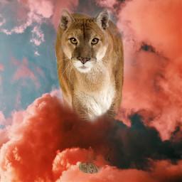 puma bigcat wild nature cute