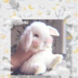 freetoedit rabbit cutie kawaii white