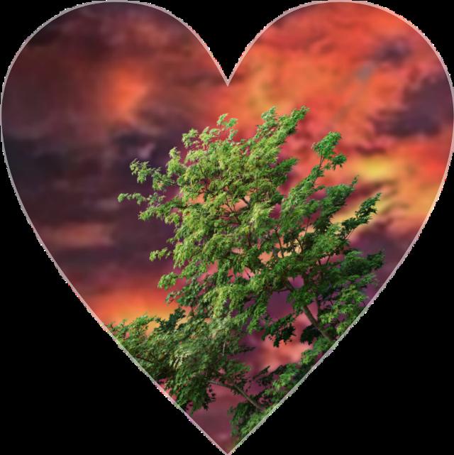 #Love #beauty   Heart Sky