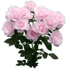 freetoedit pink розовый flowers цветы