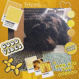 freetoedit mydog yellowaesthetic brightyellow lotsofstickers