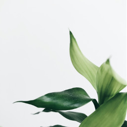 green plant nature background backgrounds freetoedit