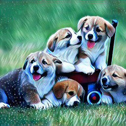cute puppies animals life colourful