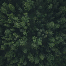 nature green trees background backgrounds freetoedit