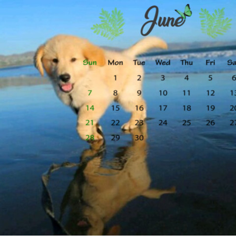 #freetoedit,#june,#junecalendar,#puppy,#dog,#srcjunecalendar,##summertime